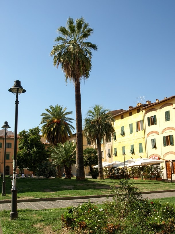 Palm trees at Piazza Dante Alighieri