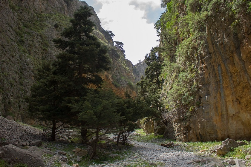 Trees in Imbros Gorge