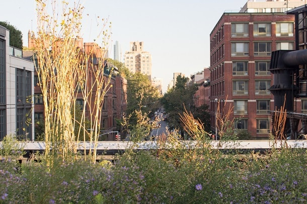 The green of the High Line