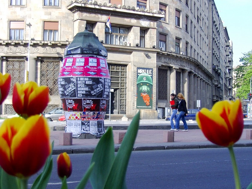 Tulips and Posters